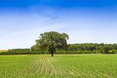 American Farmland With Blue Sky — Stock Photo