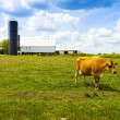 Stock Photo: Dairy Farm