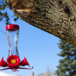 Bird feeder — Stock Photo #25994357