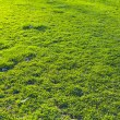 Lawn Background — 图库照片