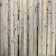 Stock Photo: Old Fence