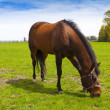 Horse on a field — Stock Photo