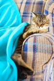 молодой кот — Стоковое фото