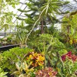 Stock Photo: Inside Greenhouse