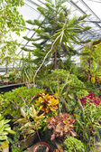 Inside Greenhouse — Stock Photo