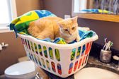 Young Cat in laundy basket — Stock Photo