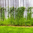 Stock Photo: Home Garden