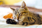 Small Kitty With Red Pillow — Stock Photo