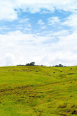 Tropical Farmland With Blue Cloudy Sky — Stock Photo