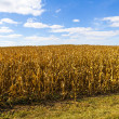 American Farmland With Blue Cloudy Sky — Стоковая фотография