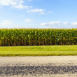 Stock Photo: American Country Road Side View