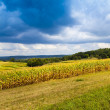 American Countryside Corn Field With Stormy Sky — Stock Photo