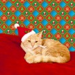 Young cat in a Christmas setting, lying on the bed — Stock Photo #32900757