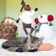 Young cat in a Christmas setting, lying on the bed — Stock Photo #32902771