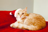 Young cat in a Christmas setting, lying on the bed — Stock Photo