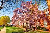 Весна в пригороде — Стоковое фото