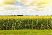 American Farmland — Stock Photo