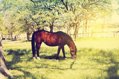 Horse in garden — Stock Photo