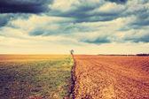 Farmland with stormy sky — Stock Photo