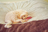 Small Kitty — Stock Photo