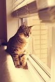 Tabby Kitty — Stock Photo