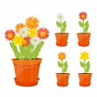 Colorful flowers in pots — Stock Vector #25795325