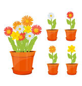 Colorful flowers in pots — Stock Vector