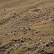 Stock Photo: Flock of sheep in Spain
