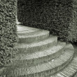 Hedges and steps - Stock Photo