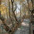 Autumn walkway — Stock Photo #23095768