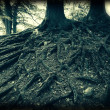 Stock Photo: Holga roots