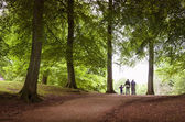 Family walk in the forest — Stock Photo