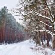 Stock Photo: Winter landscape with snowy tree in forest