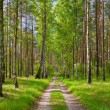 Forest road. — Stock Photo
