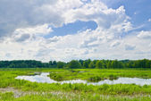 Cloudy landscape with flood waters of Narew river. — Stock Photo