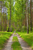 The way by the forest. Beautiful wallpaper. — Stock Photo