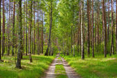 Forest road. — Stockfoto