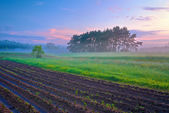 Beautiful morning landscape with field and trees in the fog. — Stock Photo