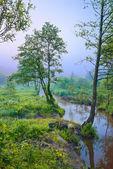 Manhã nublada com árvore na beira de um riacho — Foto Stock