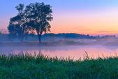 красивые туманный рассвет над реки нарев. — Стоковое фото