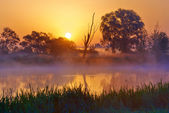 Beautiful foggy sunrise over the Narew river. — Stock Photo