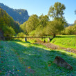 Mountain landscape with litlle bridge in The Dunajec River Gorge — Stock Photo