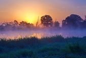 Beautiful foggy sunrise over the Narew river. — Stock Photo