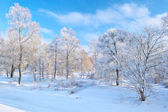 Beautiful snowy landscape by the Narew river valley. — Stock Photo