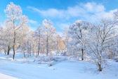 Bela paisagem de neve pelo vale do rio narew. — Foto Stock