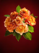 Beautiful bouquet of orange roses on dark red background. — Stockfoto