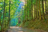 Sun rays in green deciduous forest. Nature Reserve. — Stock Photo