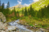 The Roztoka Stream. The High Tatras, Carpathian Mountains. — Stock Photo