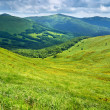 Grassland and forest in Carpathians. Mountains landscape. — Stock Photo #48245429