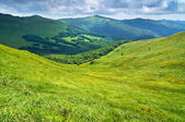 Grassland and forest in Carpathians. Mountains landscape. — Stock Photo